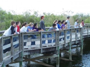 Observing the alligators