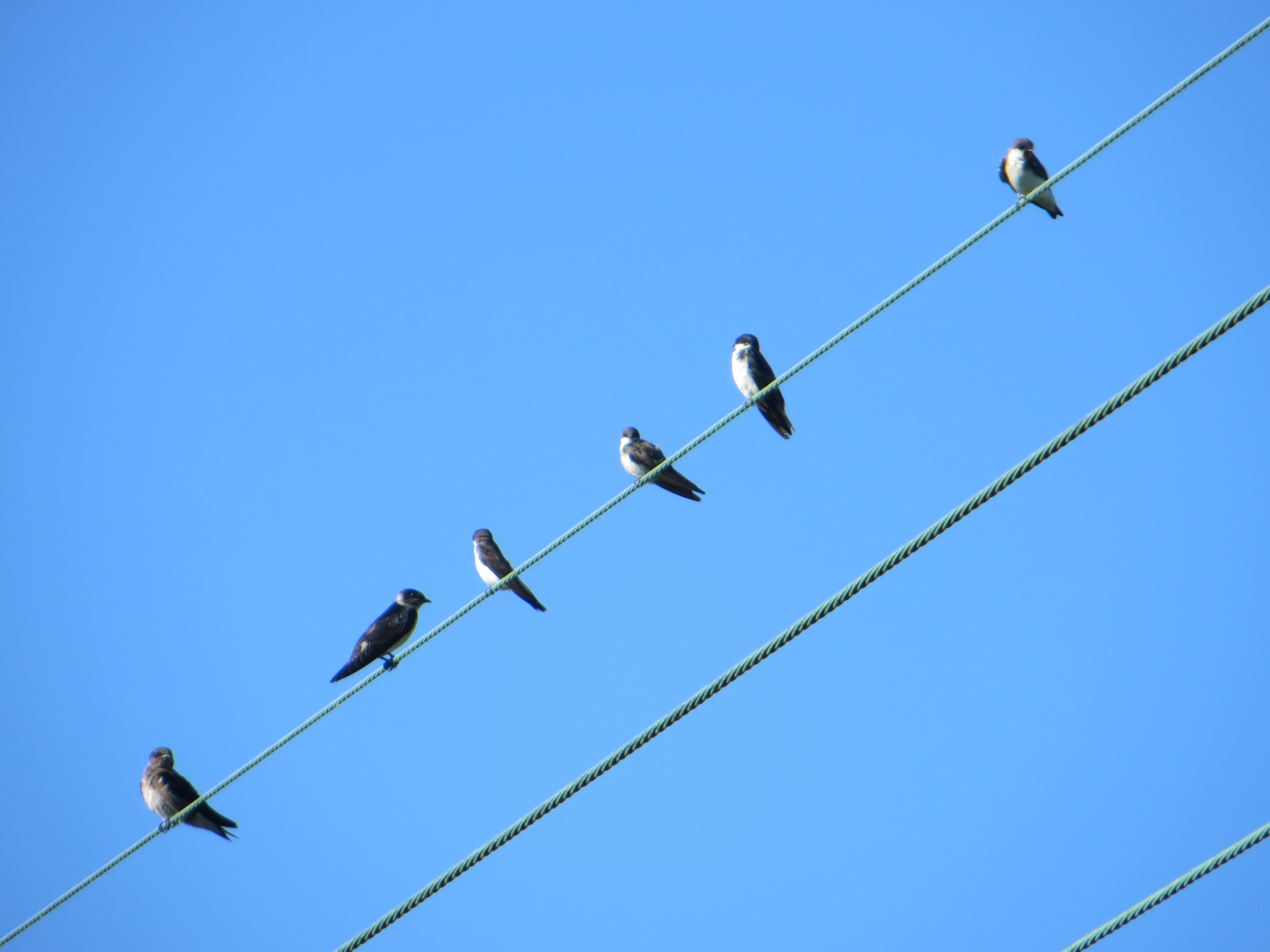 Birds On The Telephone Line | Webner House