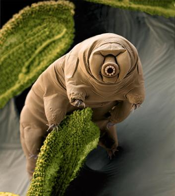 tardigrade_imagelarge
