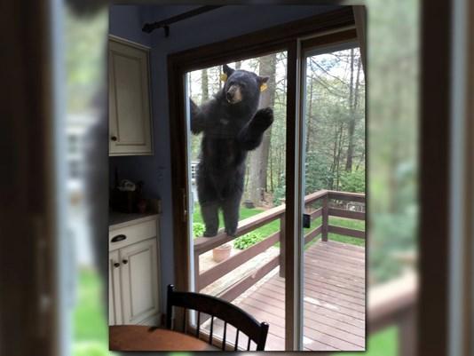 bear_1494327955157_9409774_ver1-0