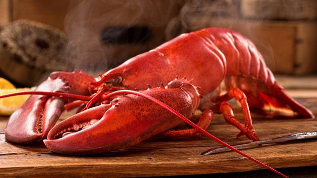 live-maine-lobster-640-2017-BOGO