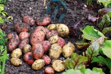 g-fruitandveg-potatoes-main