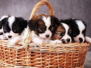 block-photos_available-pets_383968525-cropped-small.jpg__320x240_q90_crop_subsampling-2_upscale