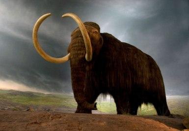 example-museum-replica-species-canadian-de-extinction