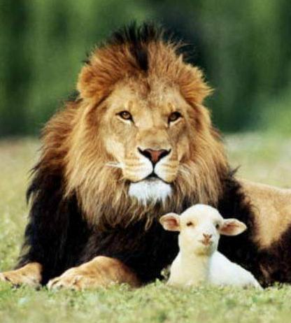 clements-20181003-lion-and-lamb